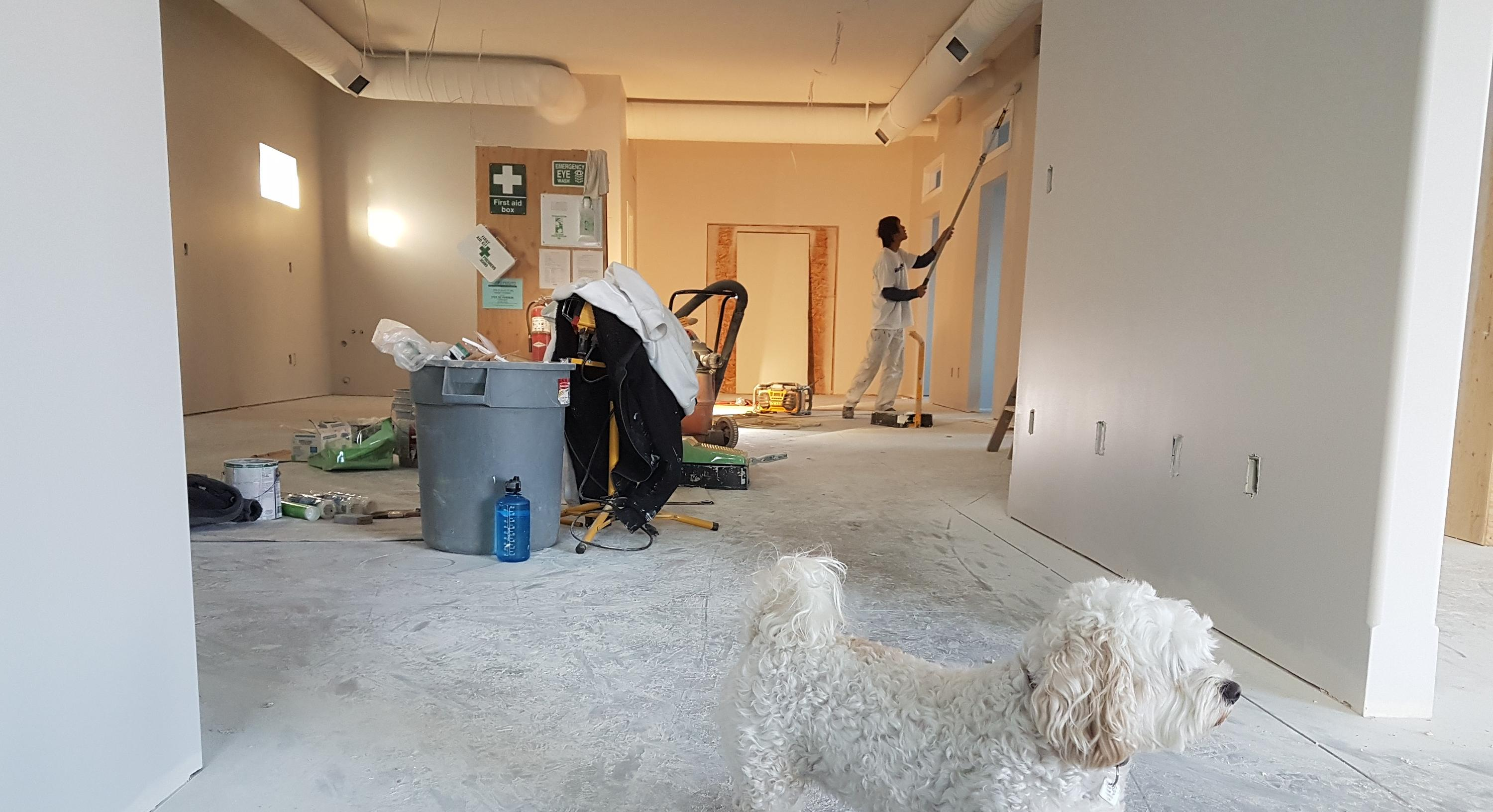 dog in home construction site